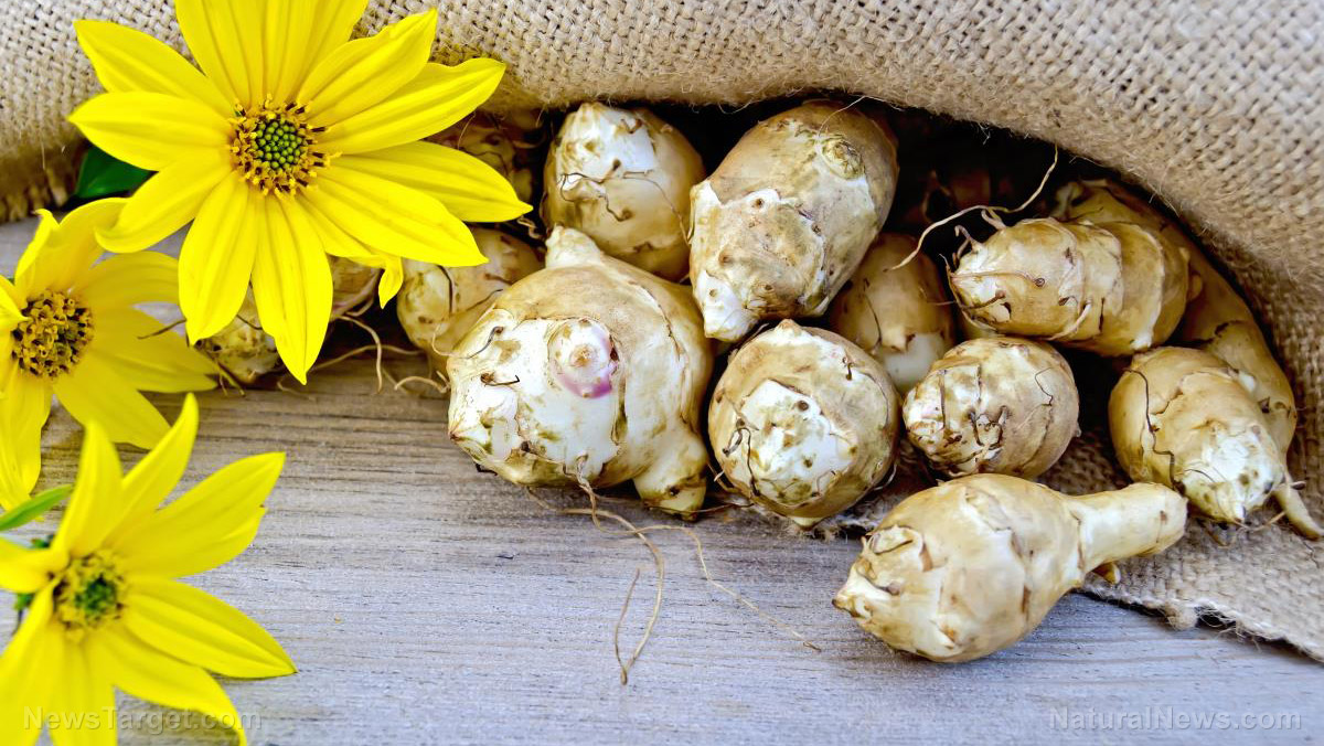 Image: Health benefits of Jerusalem artichoke and its potential use in food products