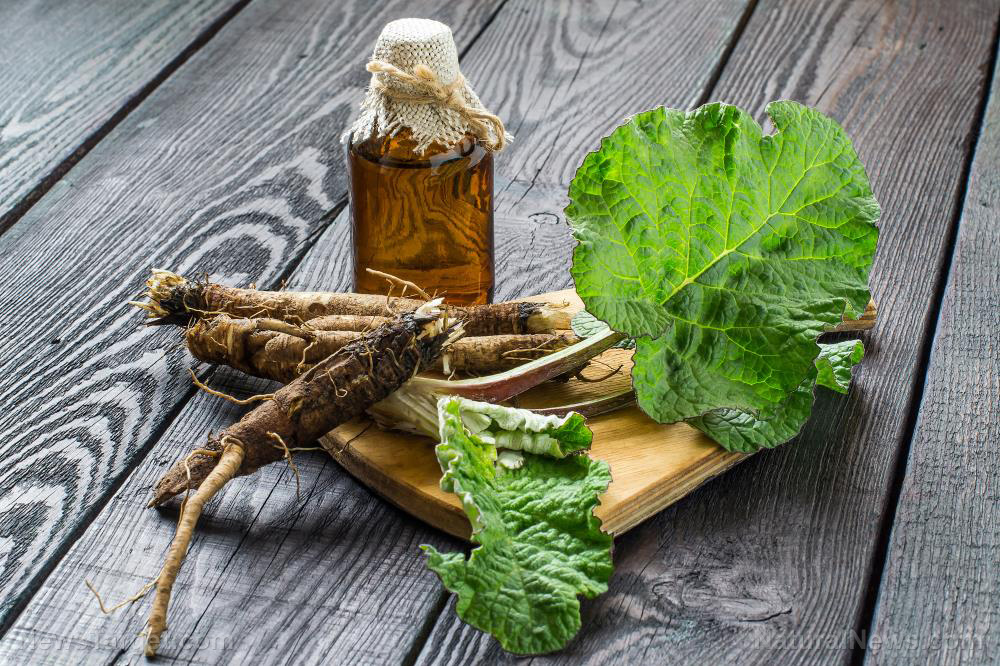 Image: The versatile burdock root is a powerful blood purifier and diuretic