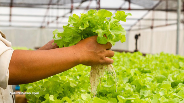 Image: 7 Reasons why you should start building an aquaponics garden now