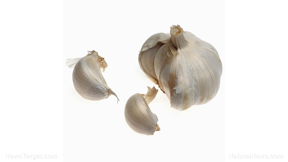 Image: Scientists find GARLIC may treat lingering Lyme disease