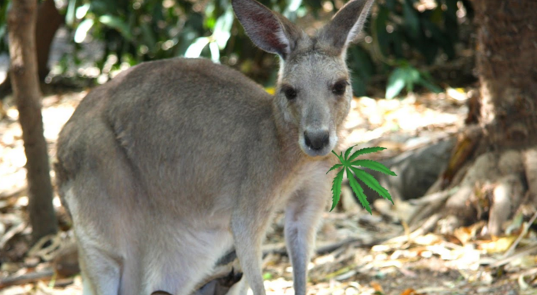 Image: In latest human cruelty to animals, zoo visitors kill kangaroo by throwing bricks at it to make it hop