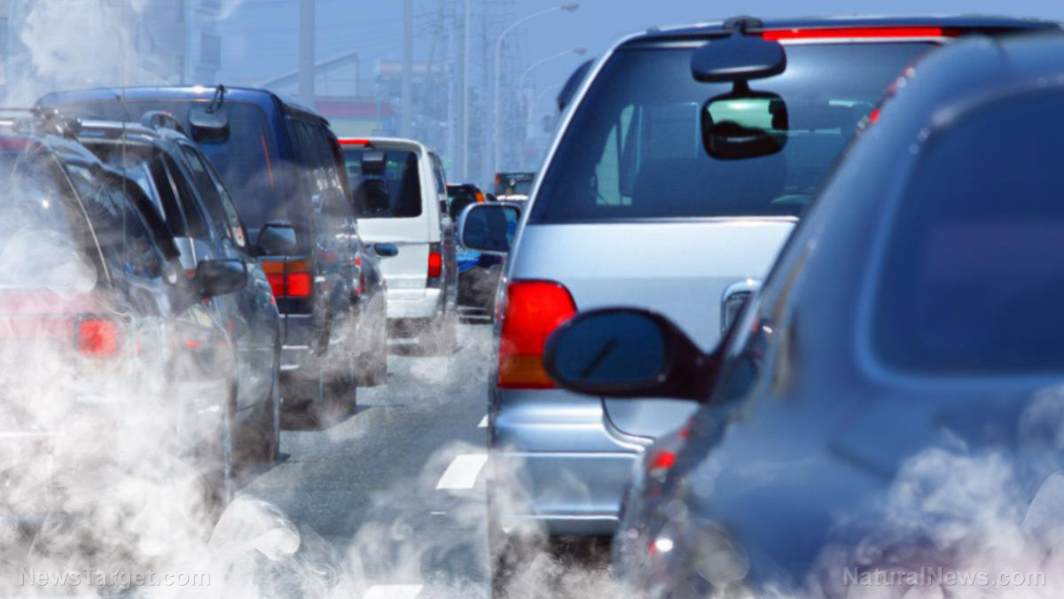 Image: New evidence PROVES that air pollution affects the placenta of developing babies