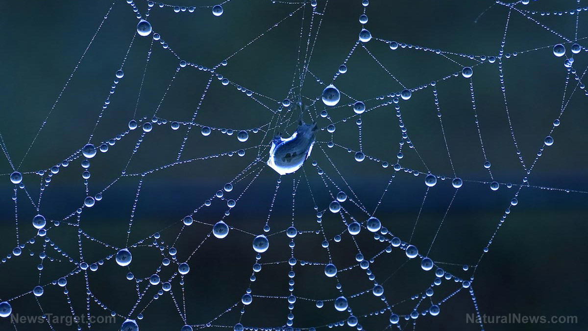 Image: An engineering feat: Different types of silk in a spider web allow it to effectively capture prey