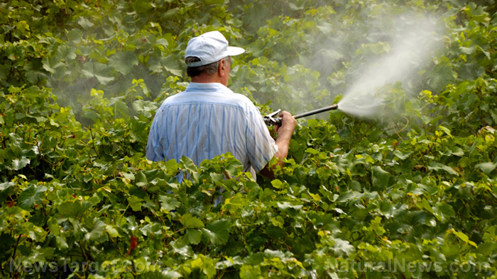 Image: Even low-level exposure to pesticides increases your risk of Parkinson's