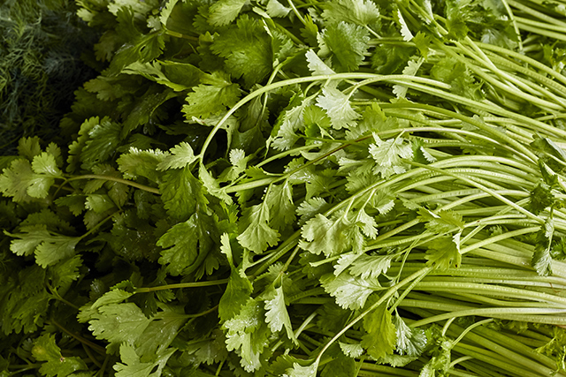 Image: Researchers look at coriander as a potential treatment for diabetes