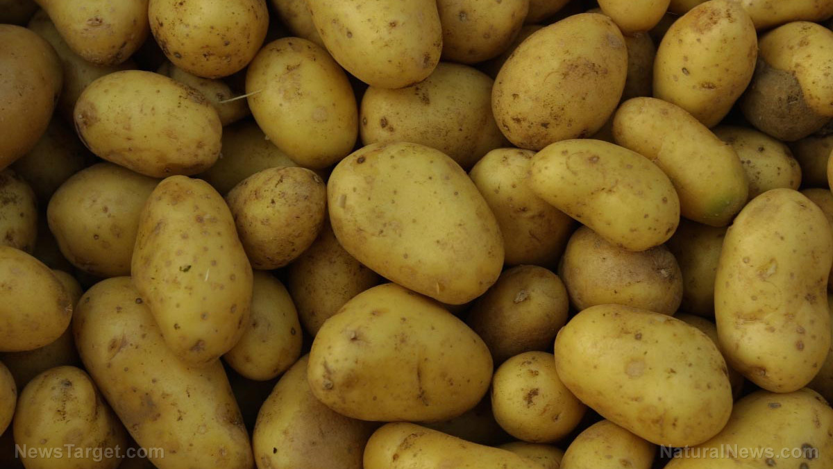 Image: GMO potato creator says he's concerned that his work may be negatively impacting human health