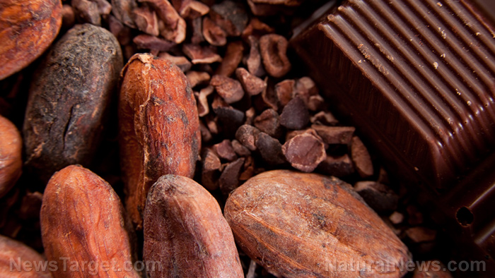 Image: Cure for coughs found in chocolate? Study finds that cocoa is effective cough medicine