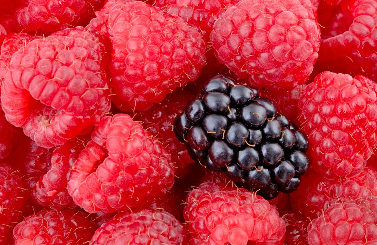 Image: Eat more berries: Anthocyanins suppress tumors, disrupt the expression of cancer genes
