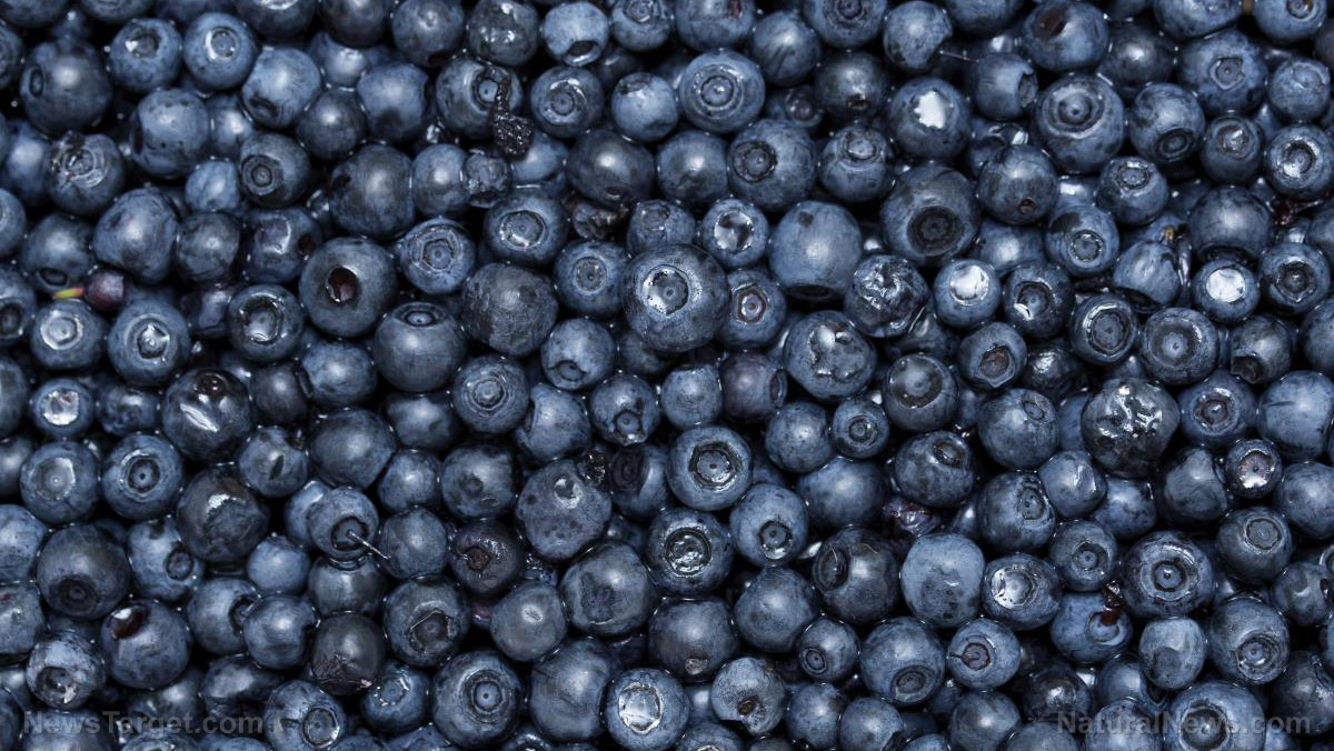 Image: New research documents four important benefits of blueberries