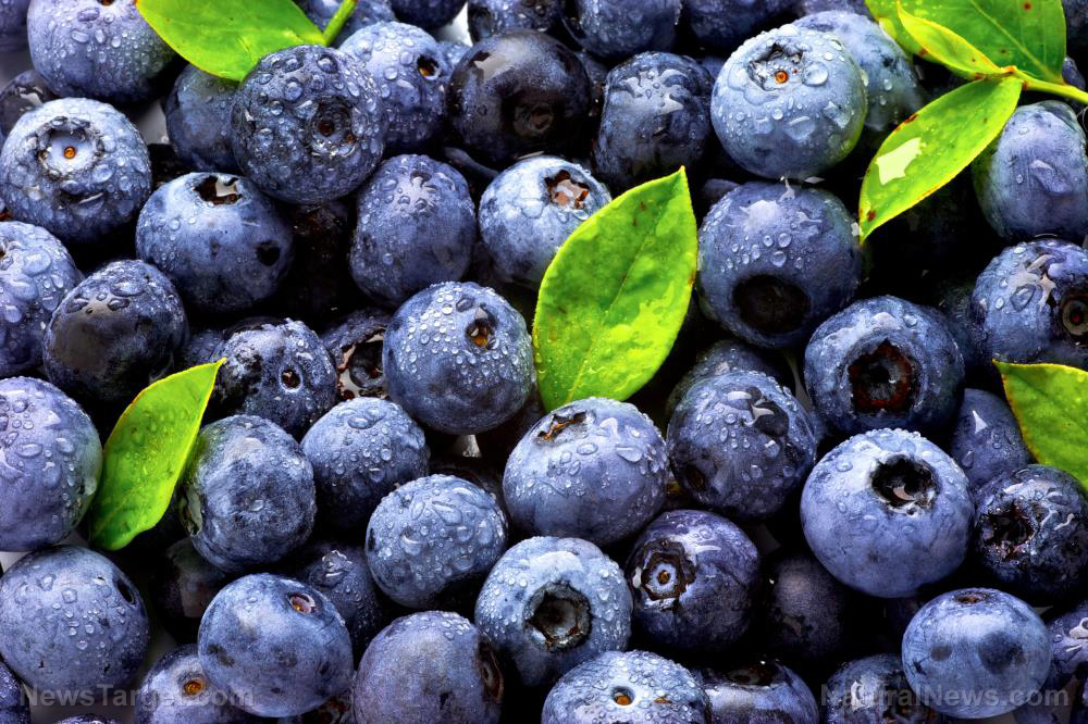 Image: Blueberries are bursting with various antioxidants that reduce the risk of dementia