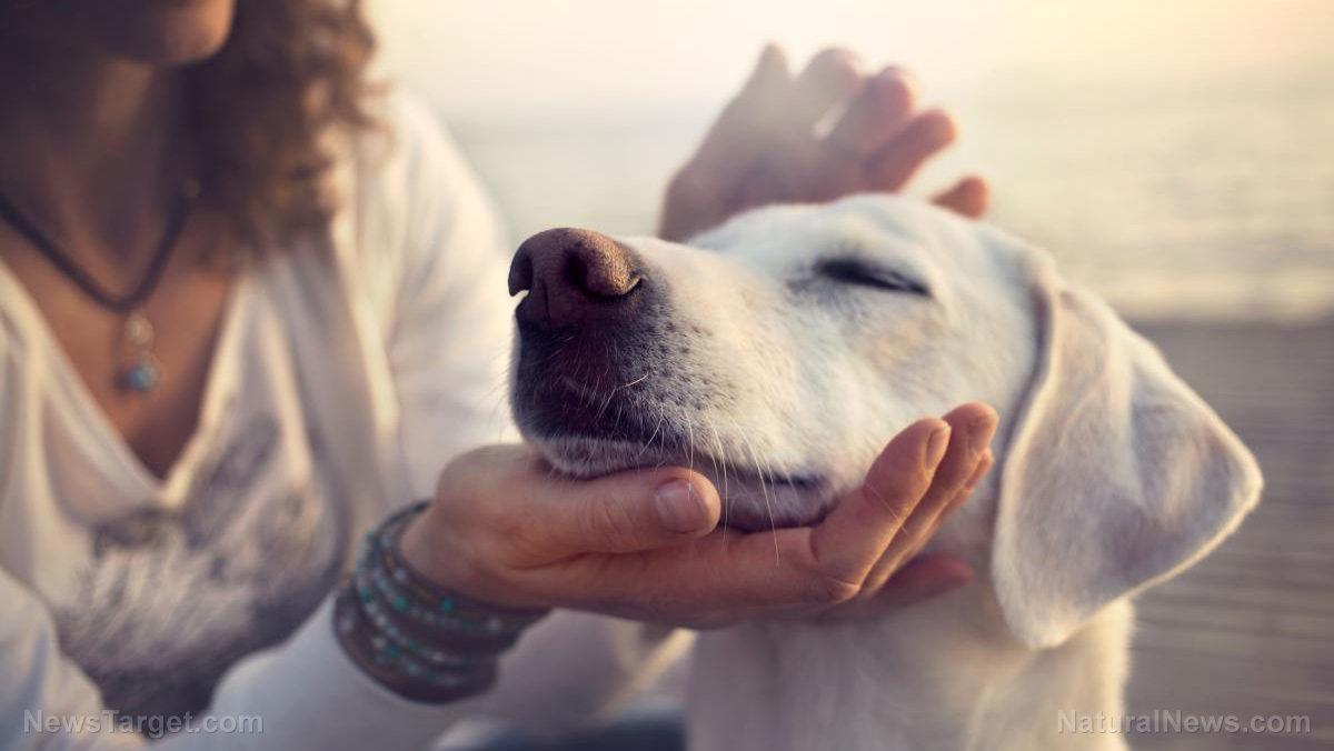 "Image: Be fluent in ""dog speech"": Animal behaviorists share science-proven ways to talk to your dog"