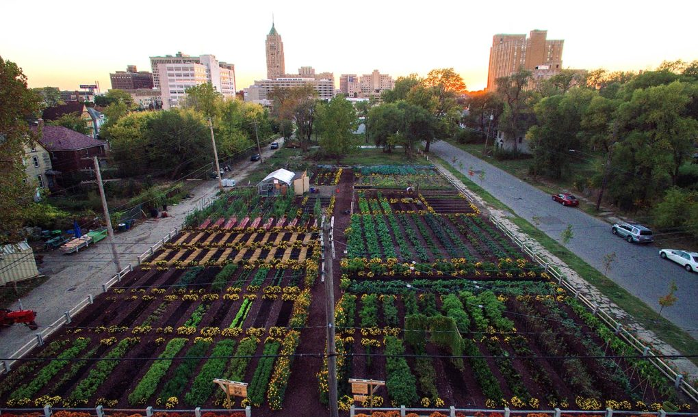 Image: Gaining food independence in the city: Researchers are working on new technologies for growing food sustainably in small, controlled spaces
