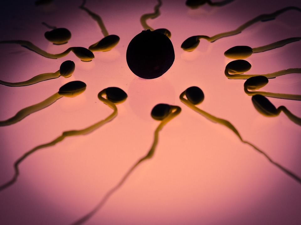 "Image: Male birth control pill that ""turns off sperm"" now closer to becoming reality, say researchers"