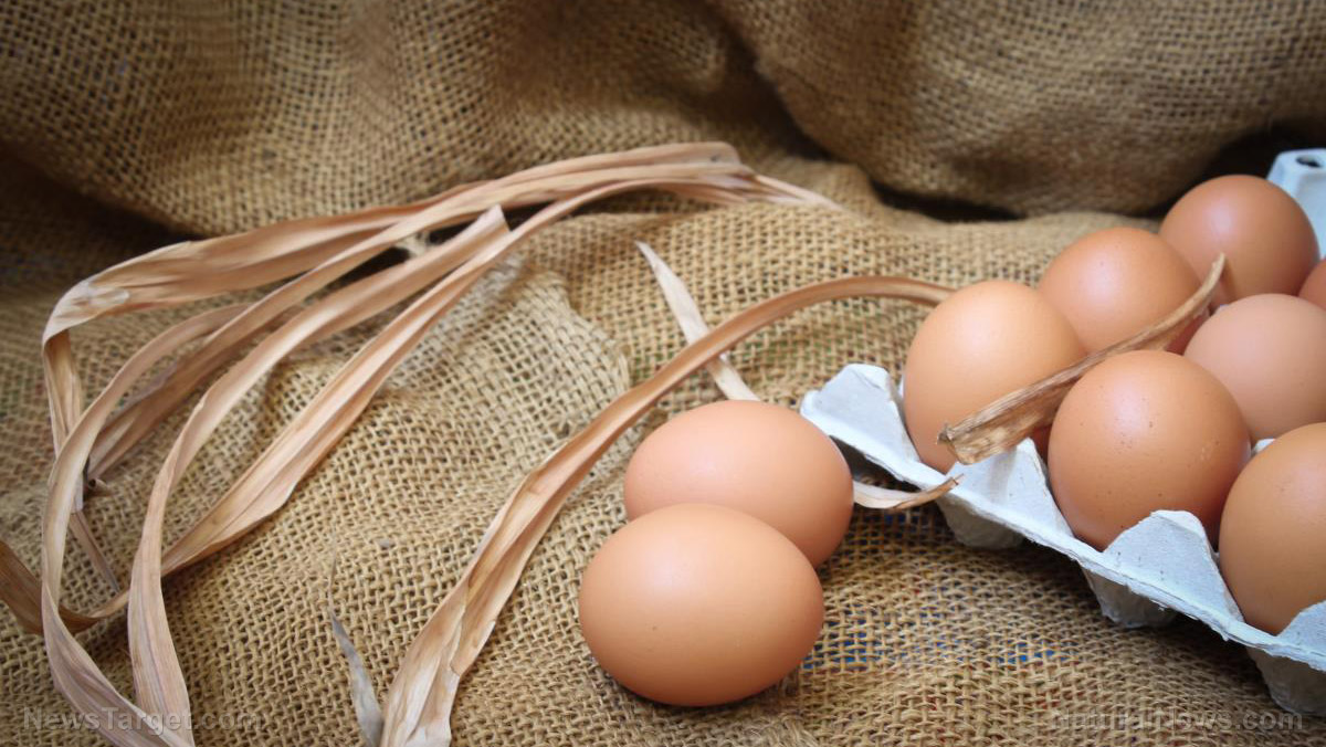 Image: Eggs in a basket: 10 Methods for preserving eggs