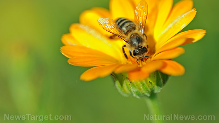 Image: Behavior of honeybees found to be influenced by what they can smell