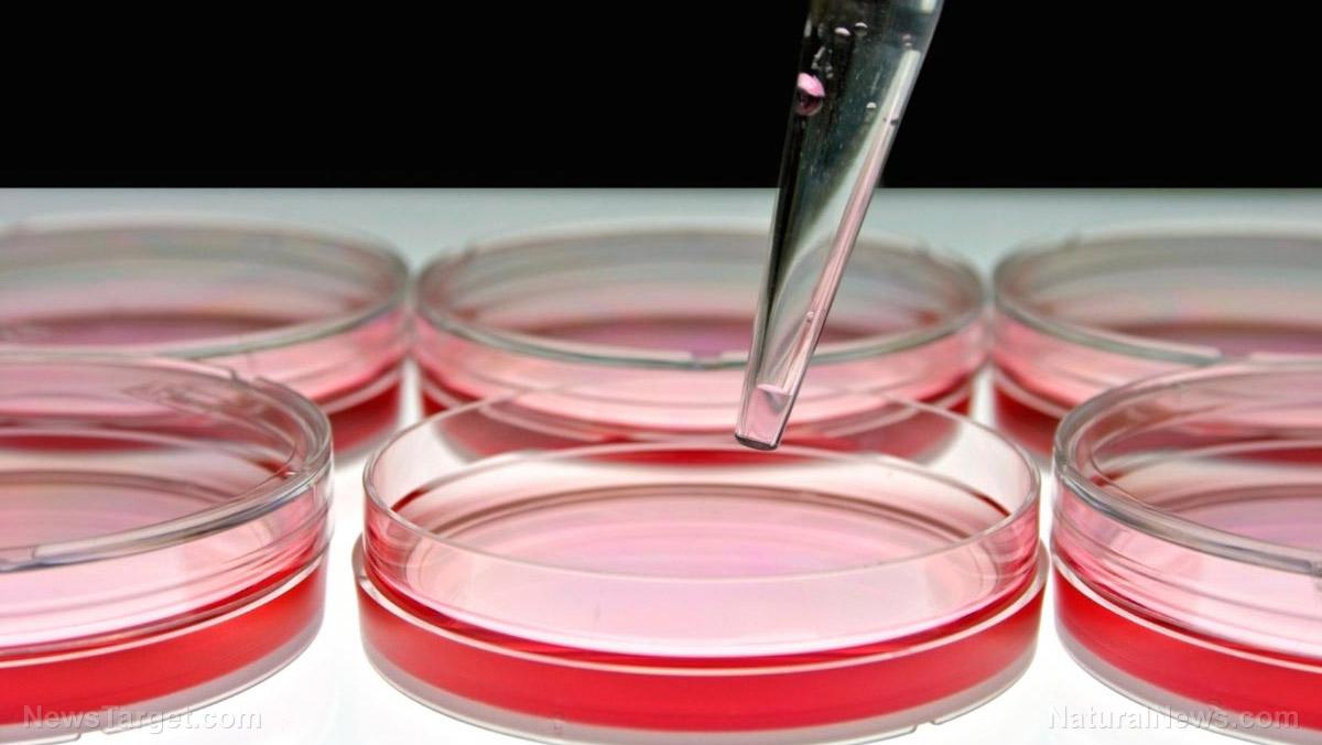 Researchers study fungi to turn food waste into sustainable bioplastic