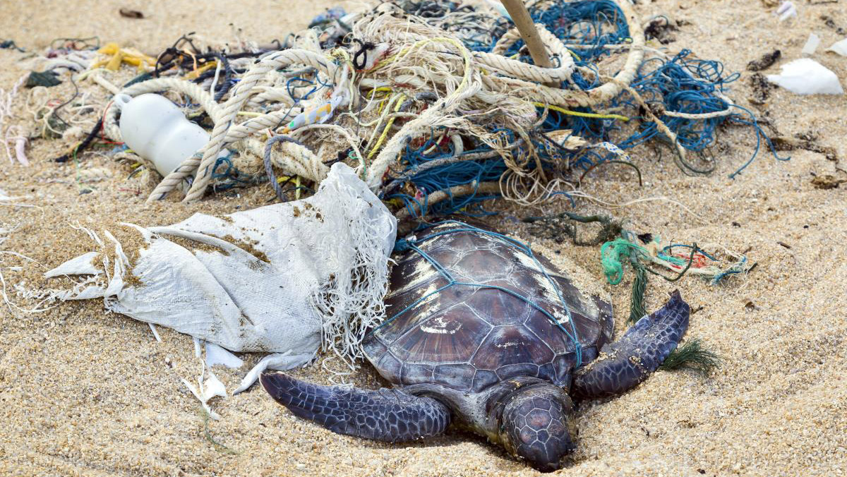 Image: New study finds that 100 PERCENT of sea turtles have plastics in their bellies
