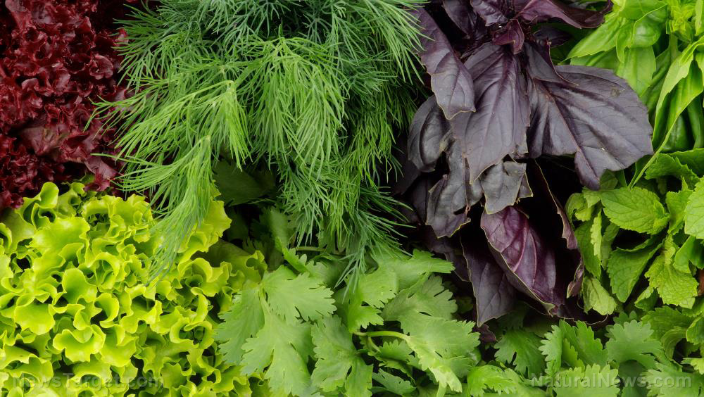 Image: Macular degeneration may be prevented by simply eating more leafy greens