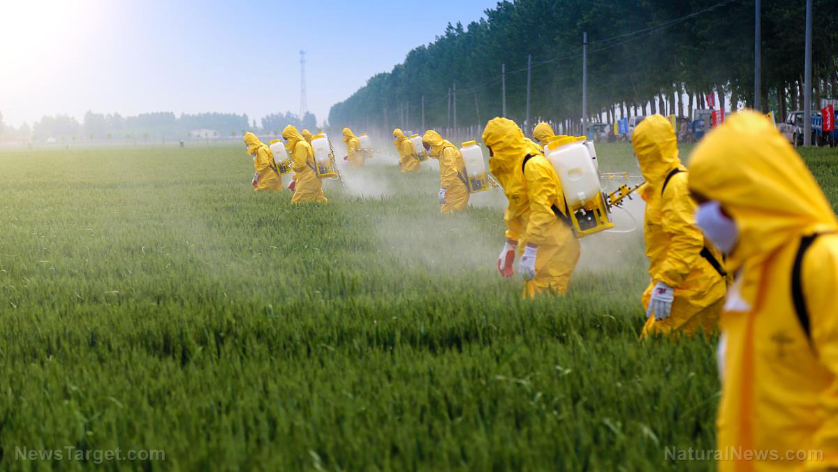 Image: A peek behind the (toxic) curtain: Here's why glyphosate is sprayed on food crops before harvest