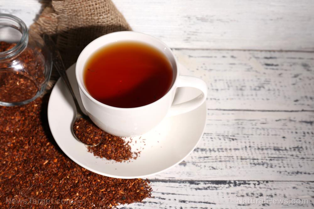 Rooibos-Tea-Healthy-Background-Plant-Roibos-Africa Rooibos tea is a caffeine-free red tea that offers amazing health benefits [your]NEWS