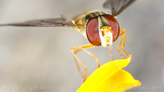 Image: Natural remedy for Parkinson's? Wasp venom shows surprising promise as a treatment