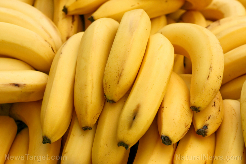 Image: Wild banana demonstrates significant potential as natural diabetes cure