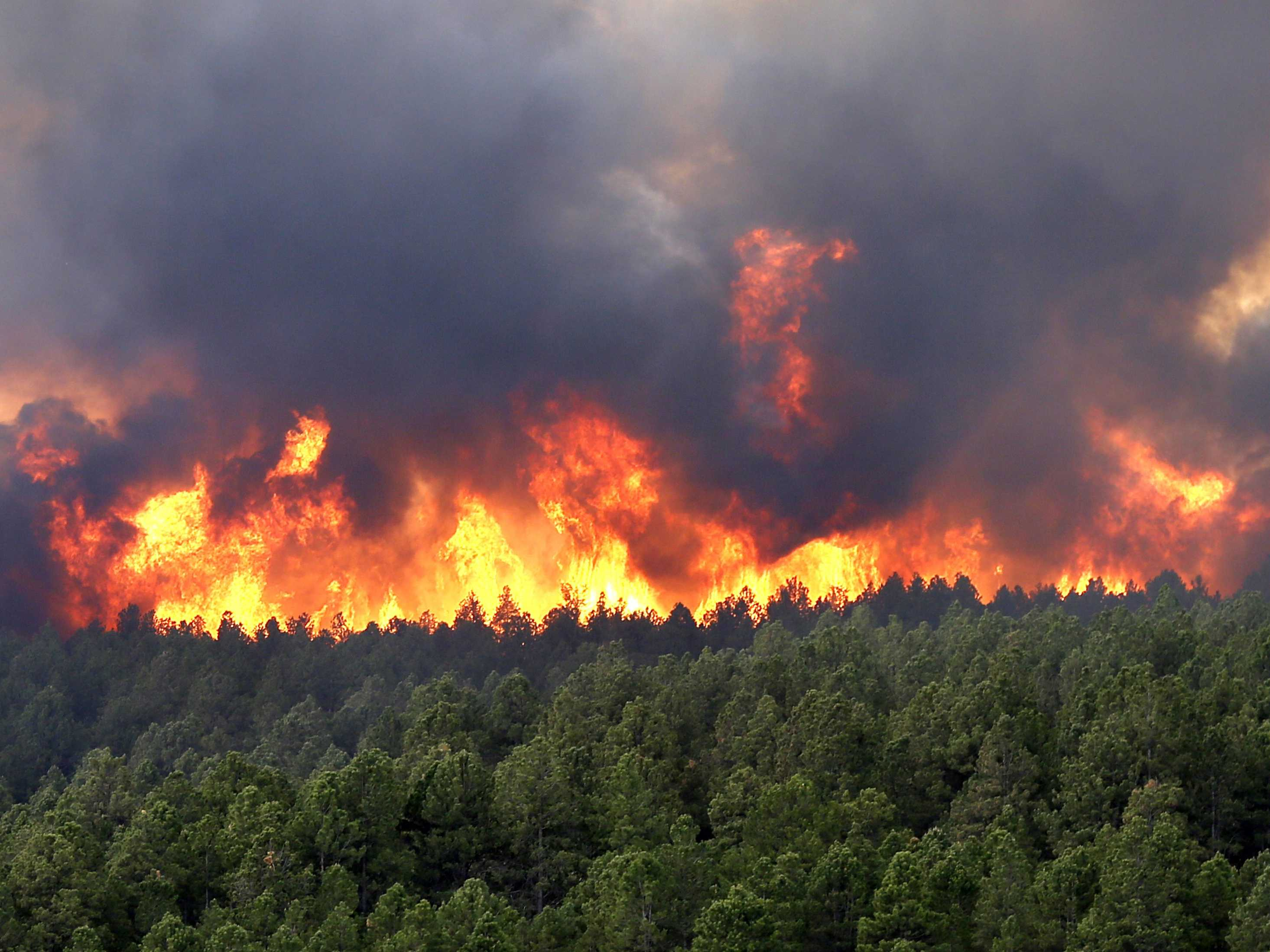Image: Past fire control efforts have interfered with the natural ecosystem of forests, increasing the risk and intensity of wildfires
