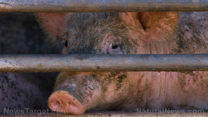 Factory farming is out of control in Iowa devastating resources: Over 50 groups are demanding limits