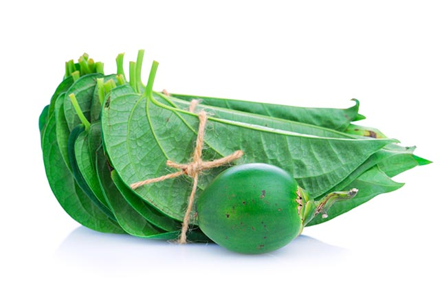 Image: Can betel leaves be used in commercial toothpaste?