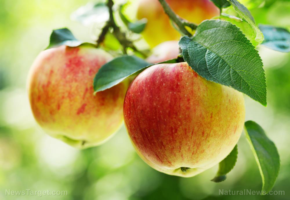 Image: Apple extract can promote stem cell regeneration and help maintain homeostasis