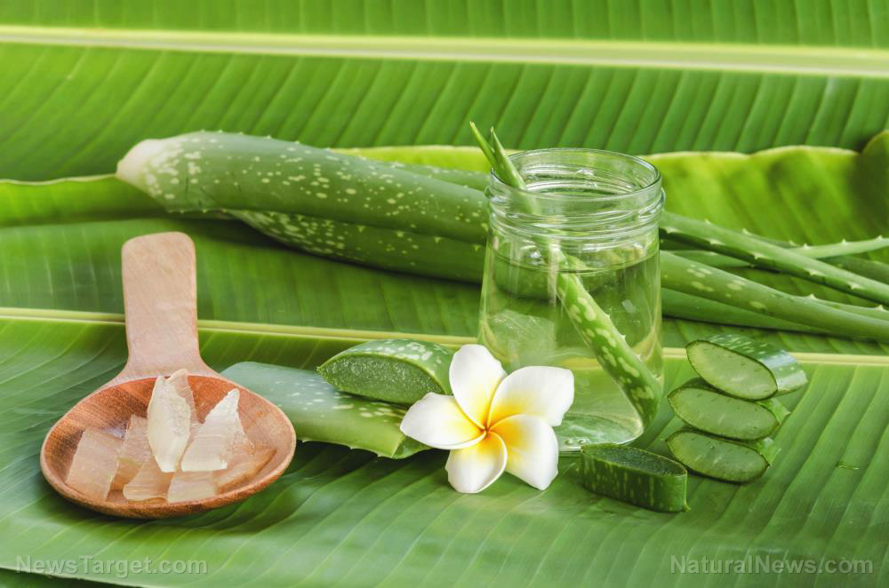 Image: Beat cystic acne with these herbal treatments