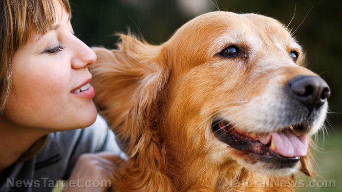 Image: Your dogs deserve better: Learn to detect and treat ear infections naturally