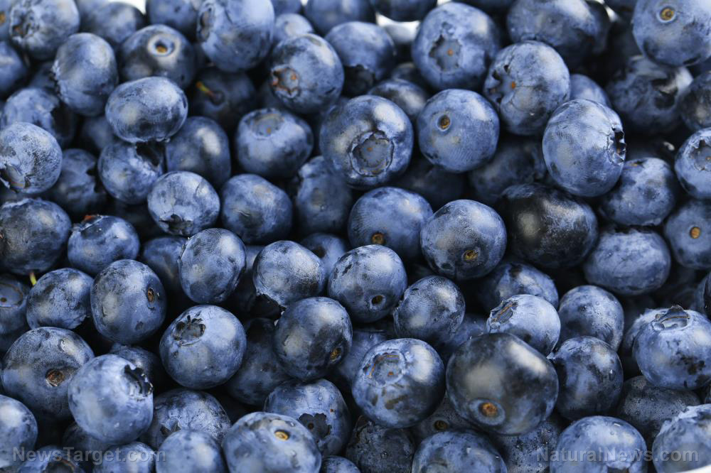 Image: Blue is good for the blood: Study finds eating blueberries improves blood vessel function