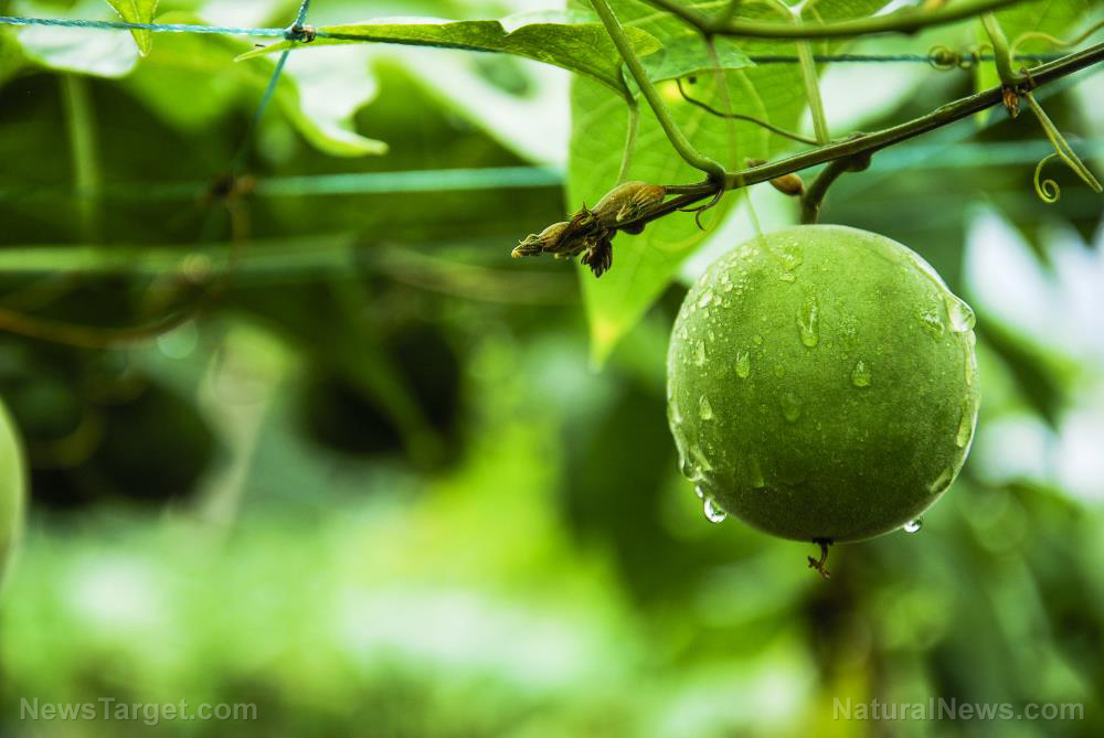 Image: Enhanced stem cell function from monk fruit produces anti-aging effects