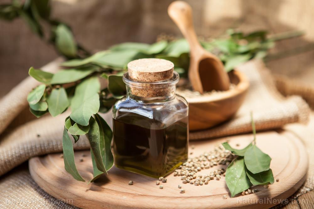 Image: The many health benefits of hemp oil
