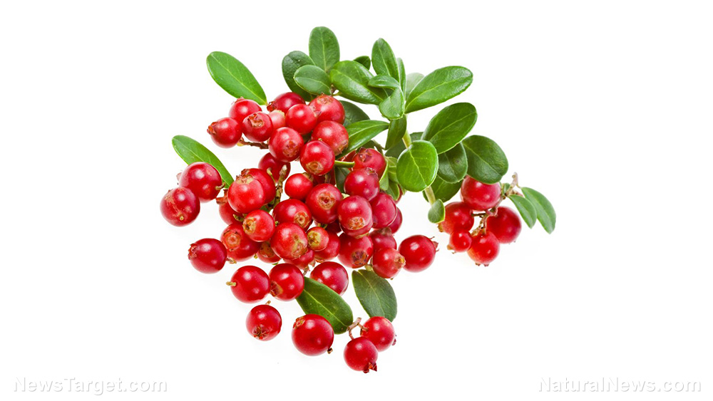 Image: 5 Health benefits that make lingonberry a real Scandinavian treasure