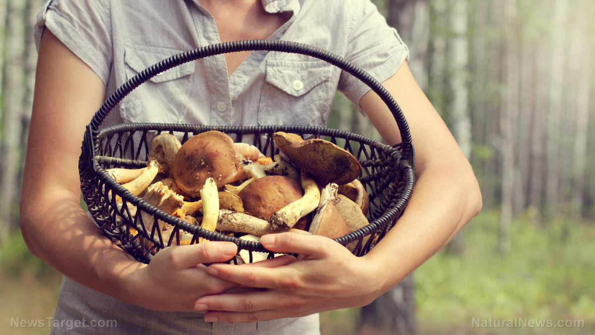 Image: Nutrient powerhouse: 5 Health benefits you can gain from medicinal mushrooms