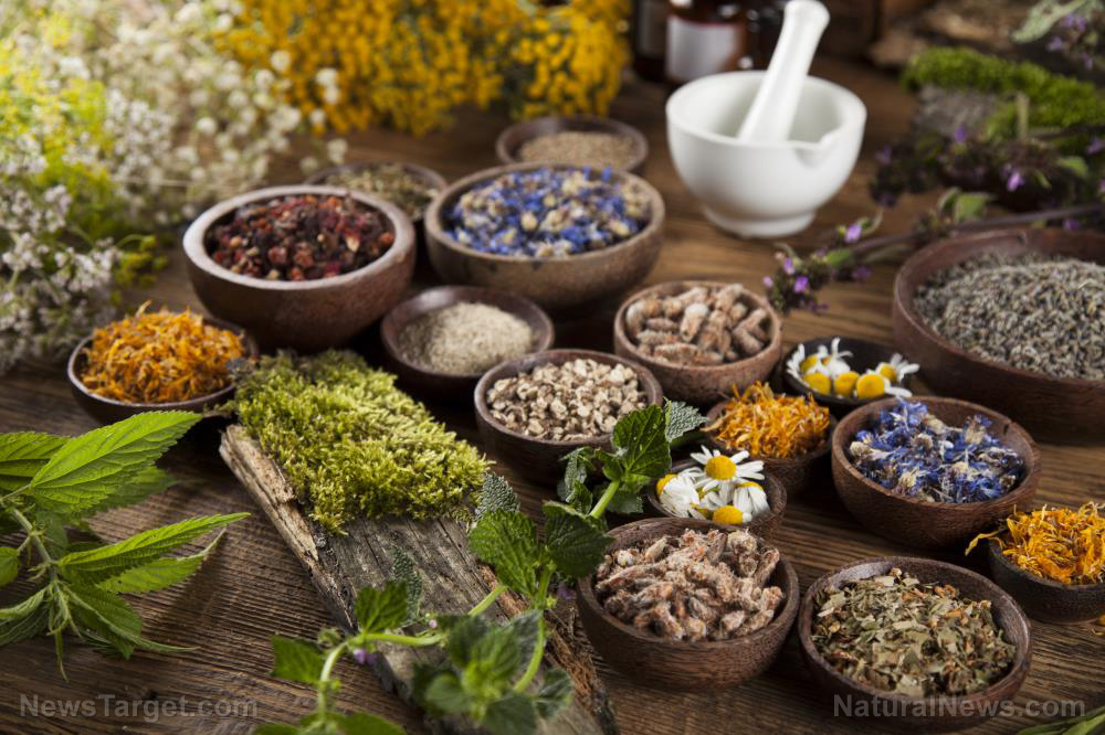 Image: Traditional herbal medicines found to be just as, if not more, effective in treating various infections than chemical drugs