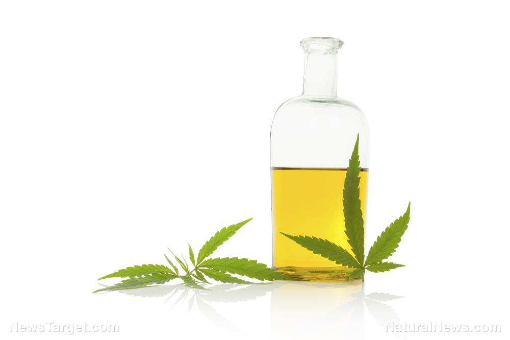 Image: Medicijn op basis van cannabis kan de spierstrakheid verlichten bij patiënten met motorneuronziekte, studievondsten