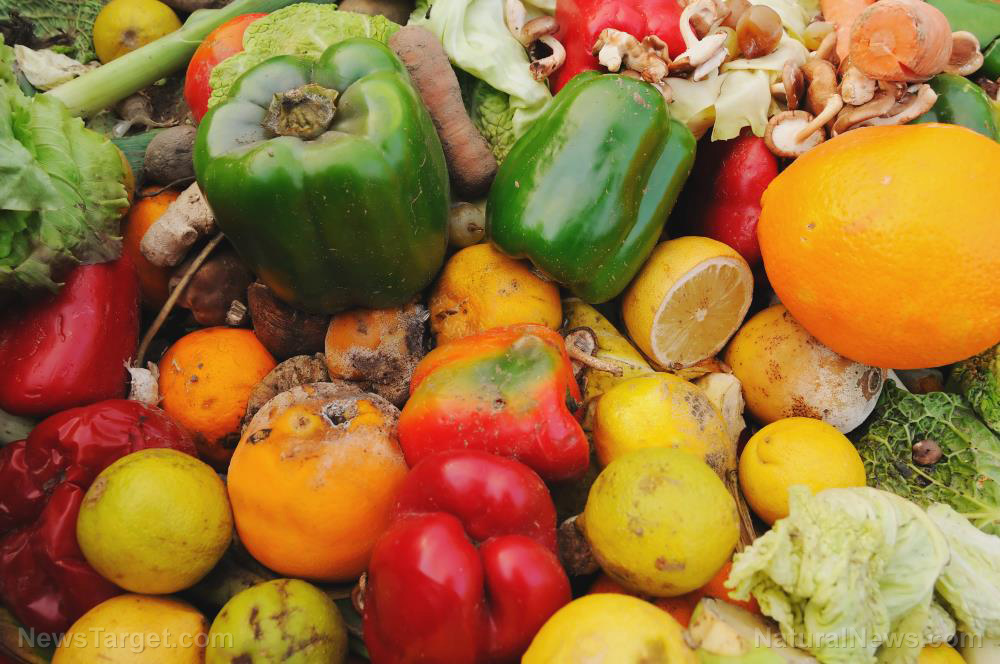 Image: Study finds new use for food waste, reusing it as feed, bioplastic
