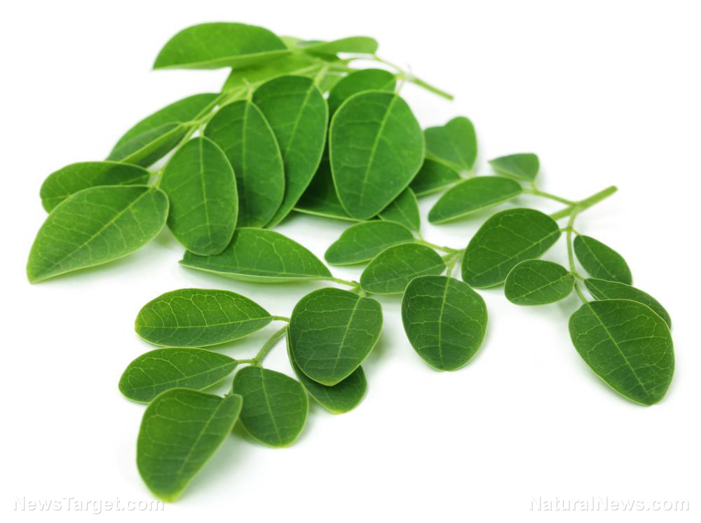 Image: Moringa could be the next thing in weight loss