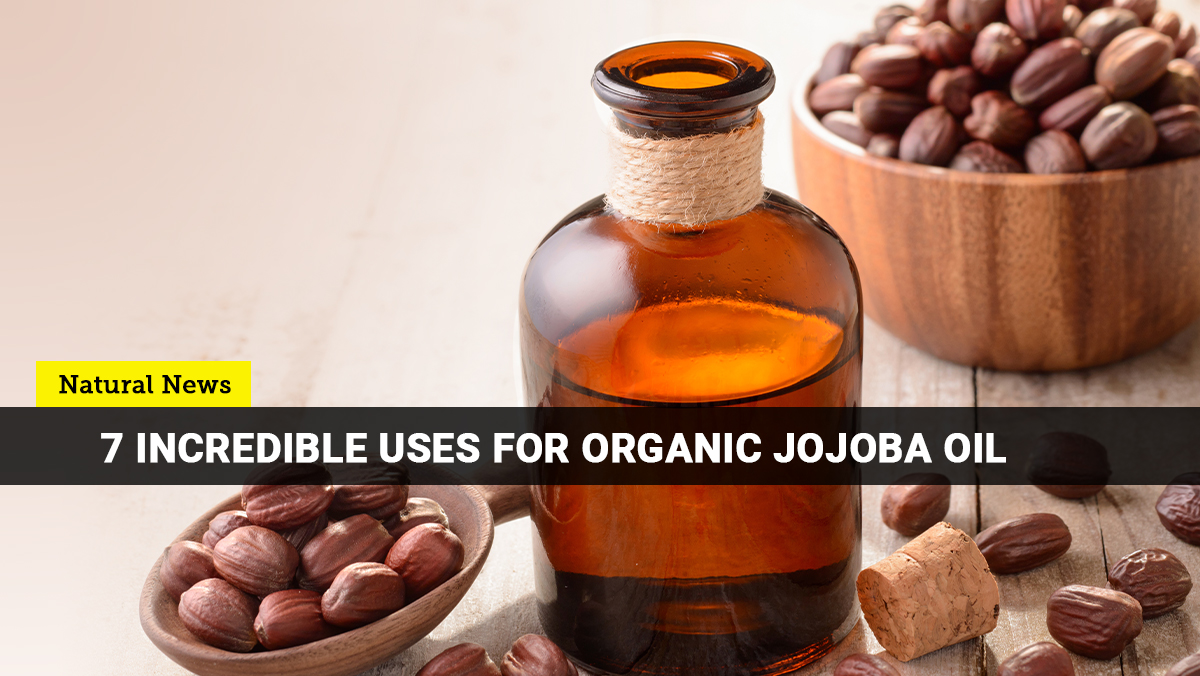 7-Incredible-uses-for-Organic-Jojoba-Oil-banner Organic Jojoba oil is so versatile that it can serve as your all-around skin and hair solution [your]NEWS