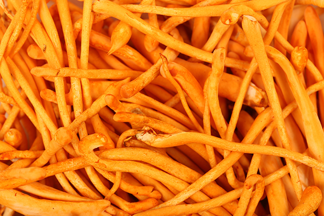 Image: Cordyceps mushrooms found to protect from allergens