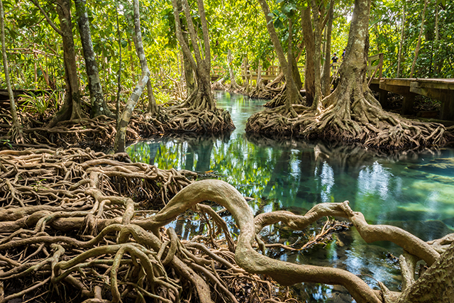 "Image: Experts call for the protection of mangrove patches, no matter how big or small, to preserve ""incredibly important ecosystems"""