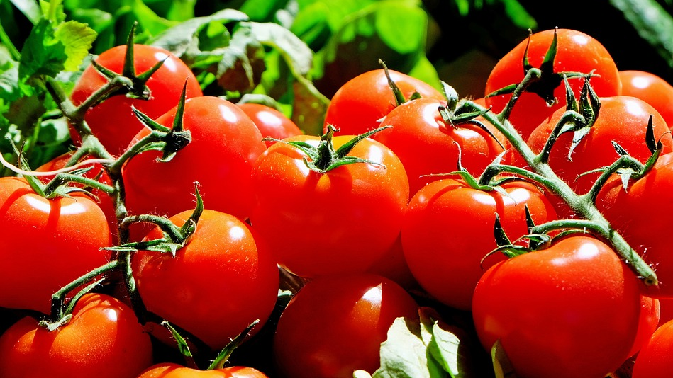 tomatoe You don't need an outdoor garden for these 6 vegetables [your]NEWS
