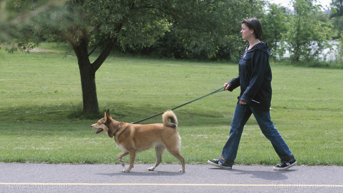 Image: Good job, Fido: Study shows dog-owners are more likely to meet their exercise targets