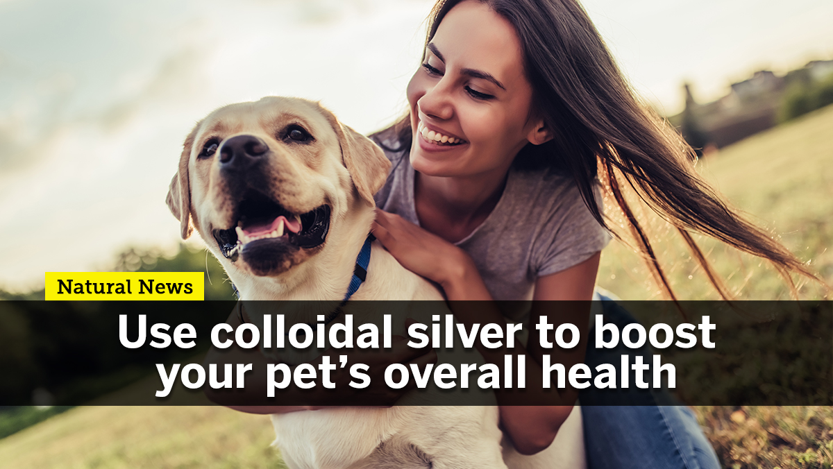 Image: Use colloidal silver to boost your pet's overall health