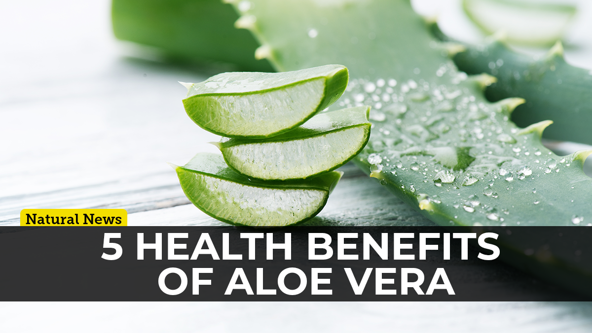 Image: Aloe vera: The plant of immortality with proven health benefits