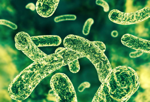 Image: Intestinal bacteria help regulate allergic responses: Researchers say certain microbes can prevent allergic reactions