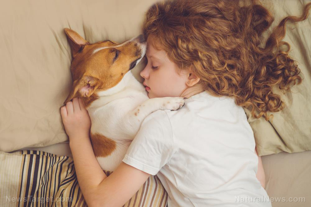 "Image: Too much loving: Being overly affectionate with pets can be ""life-threatening,"" warns researcher"